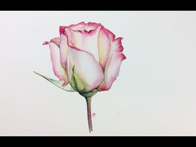 Realistic Rose in Watercolor Painting Tutorial