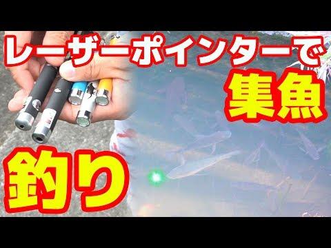 [釣り革命]レーザーポインターで集魚が出来る!?