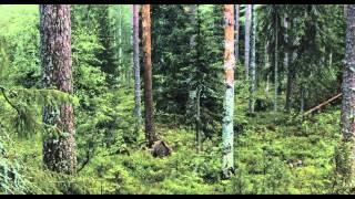 Россия - Царство тигров, медведей и вулканов