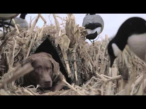 Zwariowane melodie - Wonny romansik (WEB-DL HD) from YouTube · Duration:  7 minutes 1 seconds