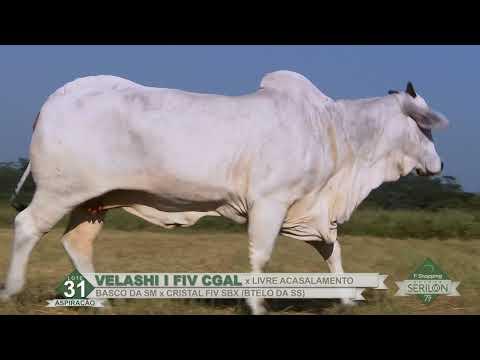 Lote 31   Velashi I FIV CGAL  (CGAL 620)