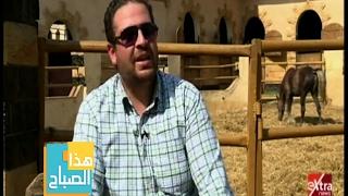 تعرف علي تاريخ مزارع الخيل العربي في مصر 'فيديو'