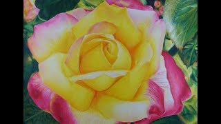 rose yellow drawing realistic