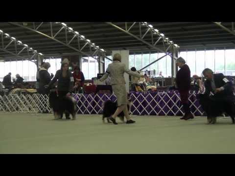 FLCV Inaugural Finnish Lapphund Champ Show - Dog Challenge