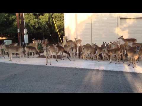 Scott Rigtrup Deer Feeding