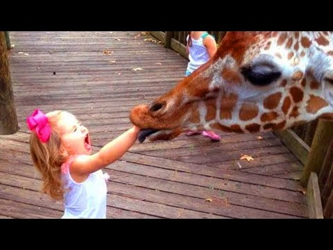 Funniest Pets of 2021 😂 – Cutest Animals Ever | Fluff Planet