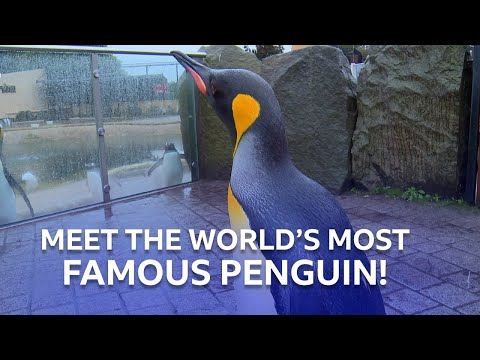 The World's Most Famous Penguin | Inside the Zoo | BBC Scotland