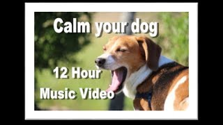 Calm Your Dog 12 hour Music Video for Anxious or Separation Anxiety