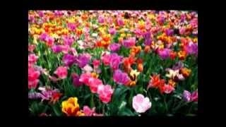 Musica Classica Vivaldi As Quatro Estações Primavera