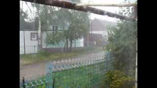Кот под дождем