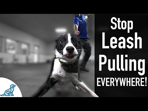 How To Teach Your Dog Not To Pull On The Leash, EVER! - Professional Dog Training Tips
