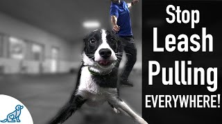 How To Teach Your Dog Not To Pull On The Leash, EVER!  Professional Dog Training Tips