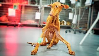 She was all twisted and shaking! YOU WILL LOVE THIS HEARTWARMING STORY OF LOVE, LOSS AND HOPE!