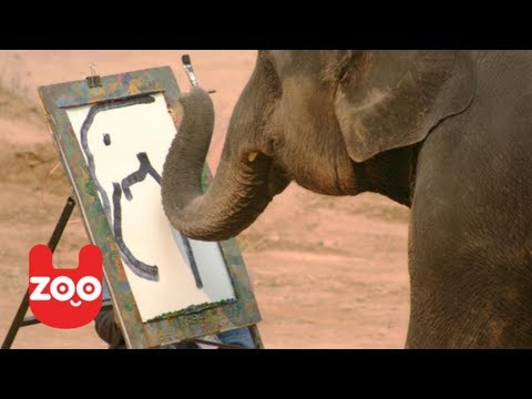 Top 5 Most Talented Animals