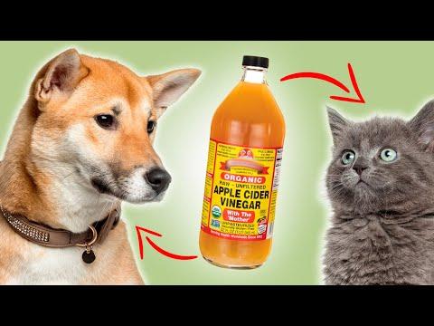 3 Ways Apple Cider Vinegar Can Help Your Pet