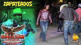 Halcón Huasteco - El Violin Alegre Pavido navido y lejos de mi tierra