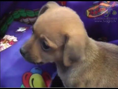 Las Mascotas Y Los Juguetes - TvAgro Por Juan Gonzalo Angel