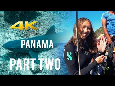 Part Two: Panama Travel & Scuba Diving 4K - Eagle Rays, Sharks and more