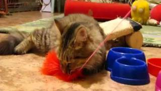 "Марыся, кошка из фонда ""Забота"", мурманск"