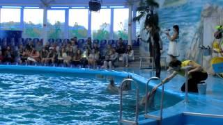 Дельфинарий НЕМО в Минске. Июль 2013. Часть 1(, 2013-07-20T11:24:49.000Z)