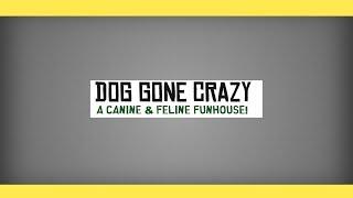 Dog Gone Crazy 2017