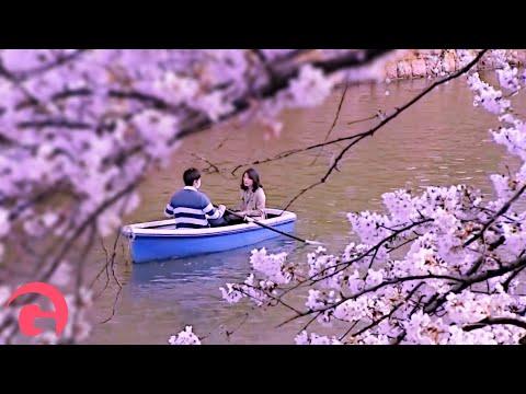Cherry Blossom Viewing At Shinjuku Gyoen Park
