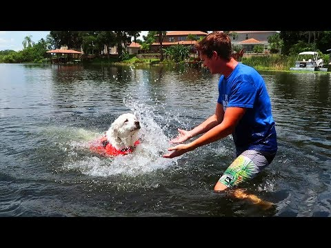 TEACHING KODA TO SWIM (Super Cooper Sunday #103)