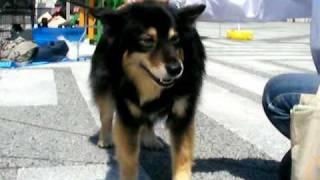犬には興味な~い。そんなセプトくんの毛並みは触り心地最高です☆ http:...