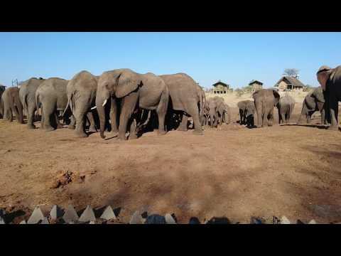 4500 km - South Africa, Botswana, Zimbabwe | Chobe, Elephant Sands, Victoria Falls, Wild Coast
