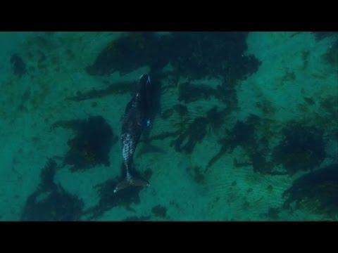 Nadando con las ballenas