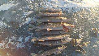 Рыбалка по первому льду. Ловим щуку на балансир