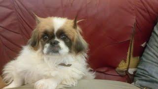Интересные истории про кошек и собак(моя животная семья 6-ое видео)