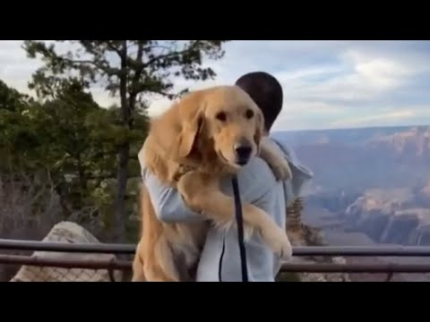 Golden Retriever gets lifted up for Grand Canyon view