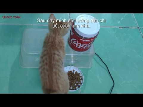 Chế tạo Máy cho mèo ăn tự động