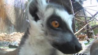 Visitamos el parque de Animales de Mundomar en Benidorm (Costa Blanca)