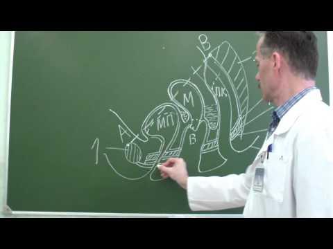 Методы диагностики органов малого таза у женщин