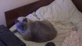 Т ТВ)Продам кота он зае..л!!