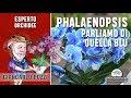 Orchidea Phalaenopsis: parliamo di quella blu