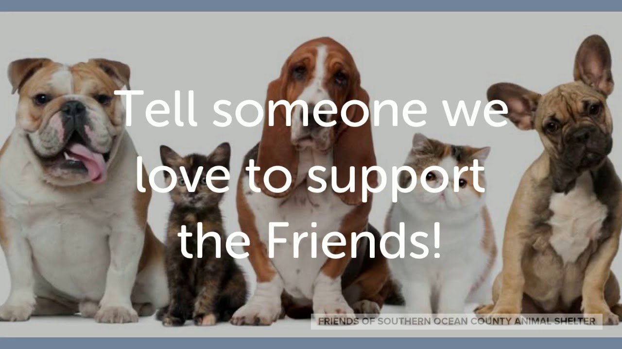 Friends of Southern Ocean County Animal Shelter