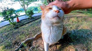 公園を歩いていたらよく喋る野良猫が話し掛けてきたので止まってナデナデしてきた