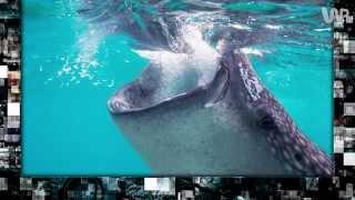 Morskie giganty wciąż rosną [Pixel]