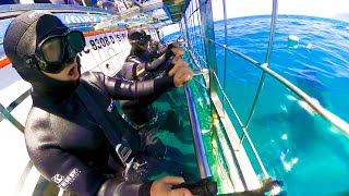CAGE DIVING WITH GREAT WHITE SHARKS!