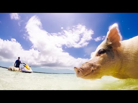 Exuma / Bahamas (part 3: Swimming Pigs)