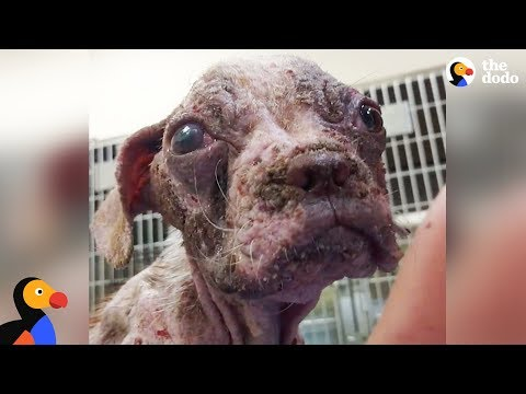 Sick Puppy Makes Incredible Comeback - LIBRE | The Dodo