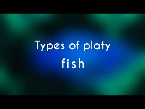 Types Of Platy Fish