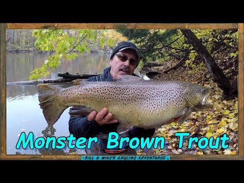 18 LB Brown Trout On The Oak Orchard River - New Personal Best