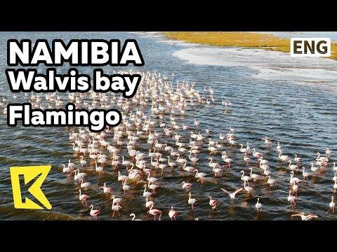 【K】Namibia Travel-Walvis bay[나미비아 여행-월비스베이]해안가 홍학/Flamingo/Coast/Bird