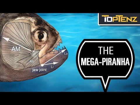 10 Prehistoric Fish That Make Sharks Look Innocent
