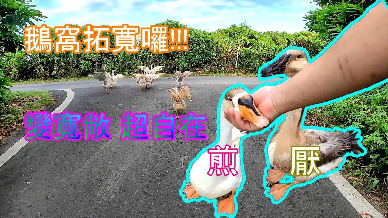 【鵝童樂園】鵝窩拓寬計畫