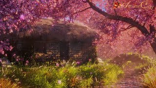 🌸✨SPRING AMBIENCE WITH CHERRY BLOSSOMS: Stream Sounds, Spring Day Sounds, Splashing screenshot 1